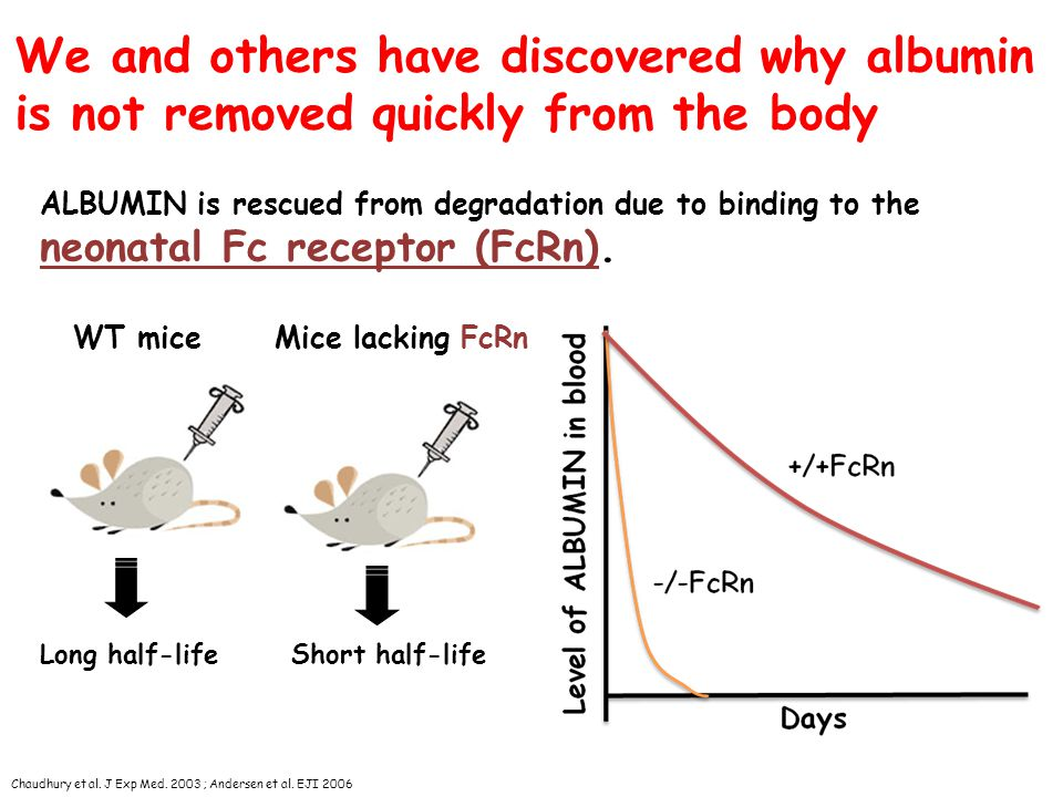 We and others have discovered why albumin is not removed quickly from the body