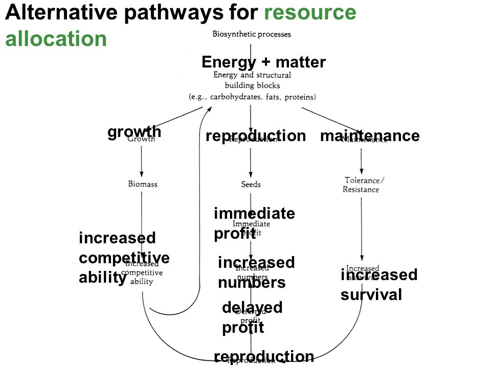 Alternative pathways for resource allocation