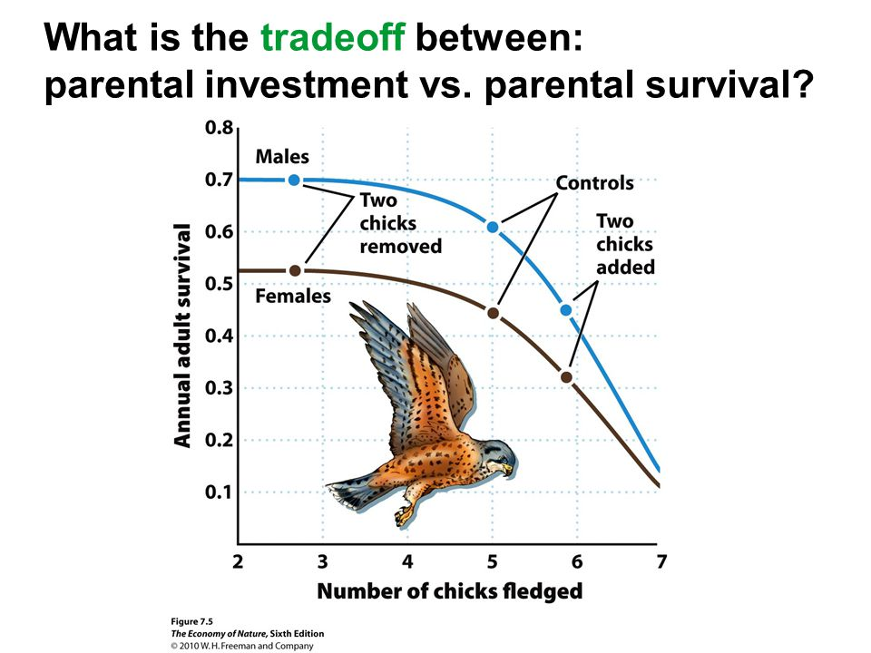 What is the tradeoff between: