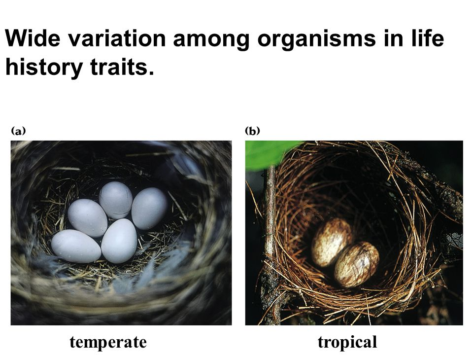 Wide variation among organisms in life history traits.