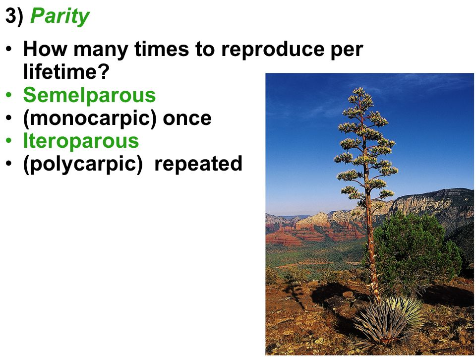 3) Parity How many times to reproduce per lifetime Semelparous. (monocarpic) once. Iteroparous.