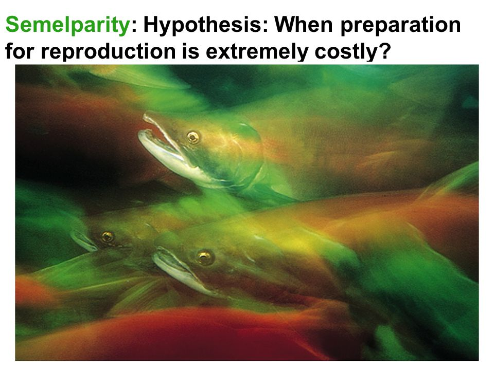 Semelparity: Hypothesis: When preparation for reproduction is extremely costly