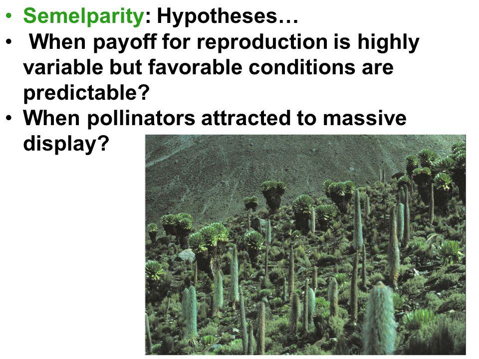 Semelparity: Hypotheses…