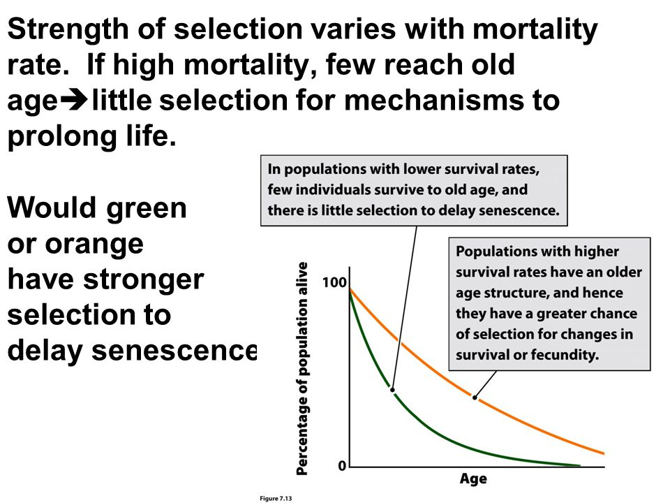Strength of selection varies with mortality rate