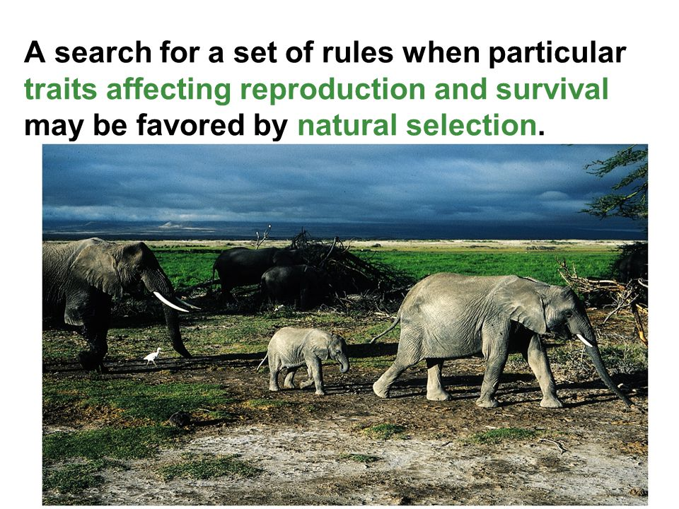 A search for a set of rules when particular traits affecting reproduction and survival may be favored by natural selection.