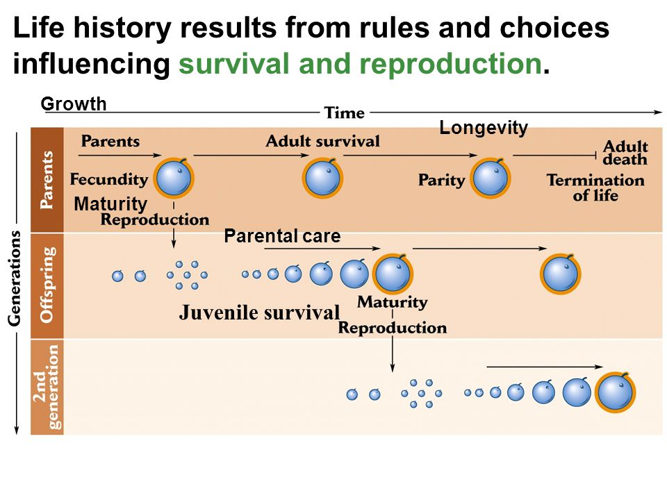 Life history results from rules and choices influencing survival and reproduction.