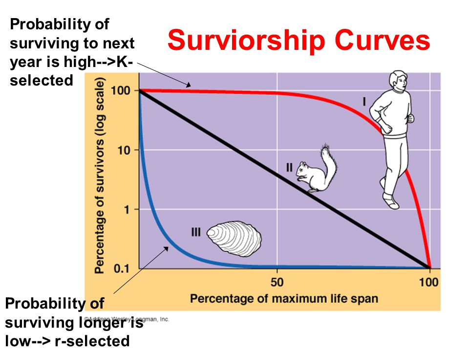 Probability of surviving to next year is high-->K-selected