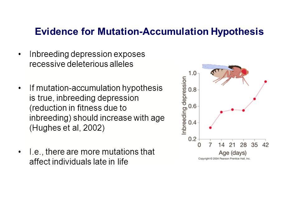 Evidence for Mutation-Accumulation Hypothesis