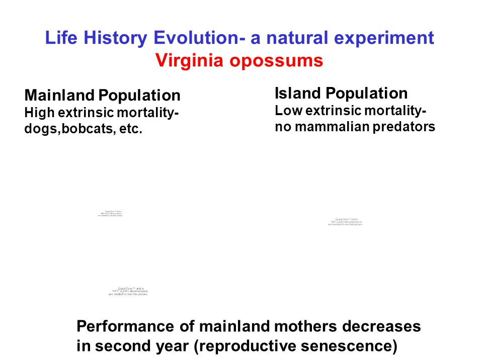 Life History Evolution- a natural experiment Virginia opossums