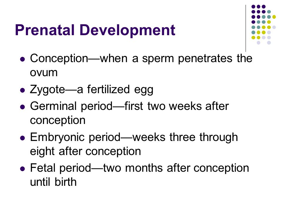 Prenatal Development Conception—when a sperm penetrates the ovum