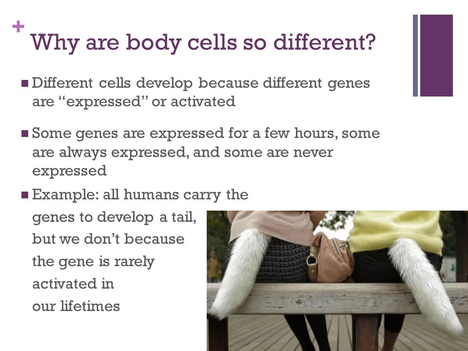 Why are body cells so different
