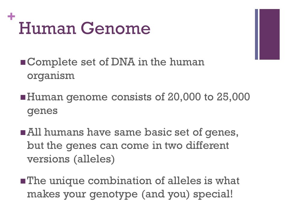 Human Genome Complete set of DNA in the human organism