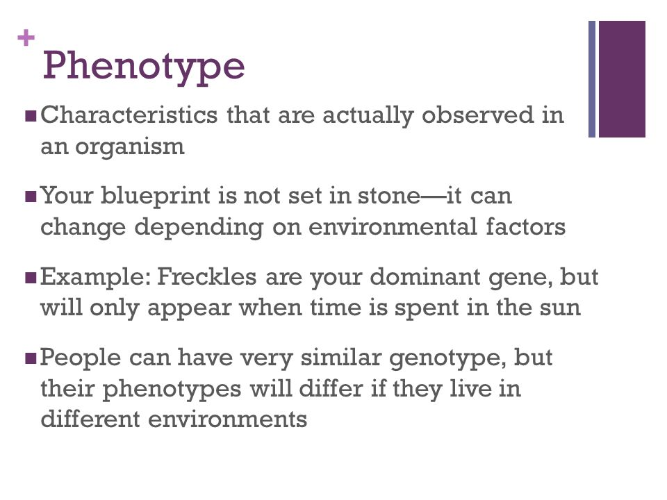 Phenotype Characteristics that are actually observed in an organism