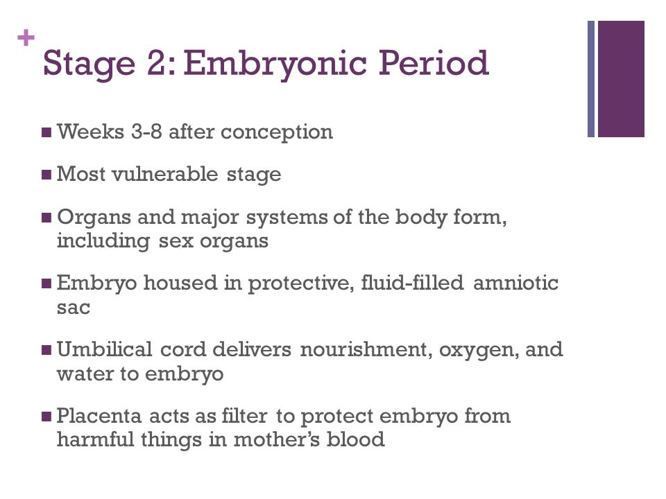Stage 2: Embryonic Period