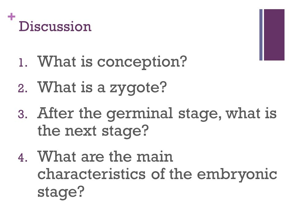 After the germinal stage, what is the next stage