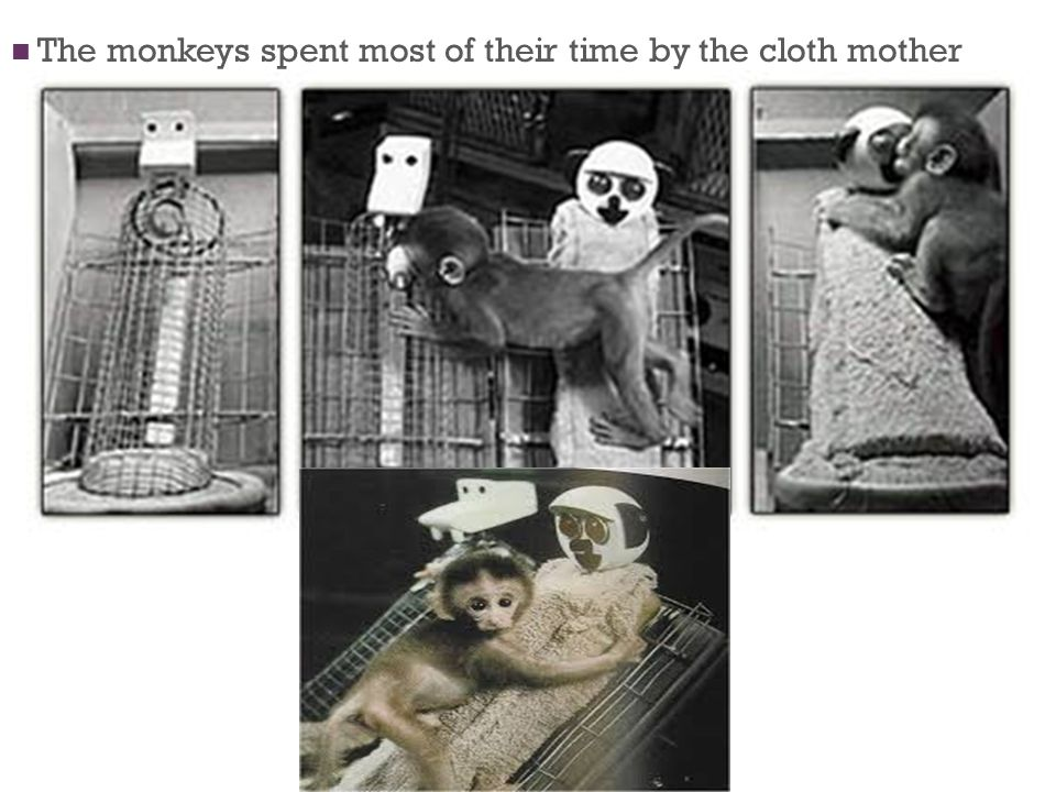 The monkeys spent most of their time by the cloth mother