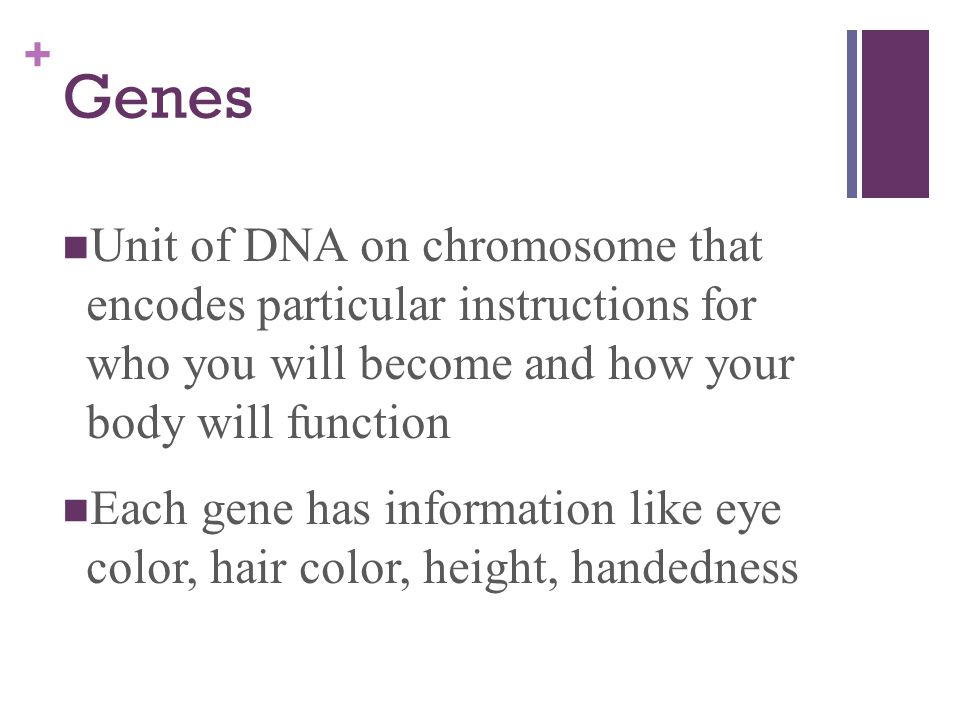 Genes Unit of DNA on chromosome that encodes particular instructions for who you will become and how your body will function.