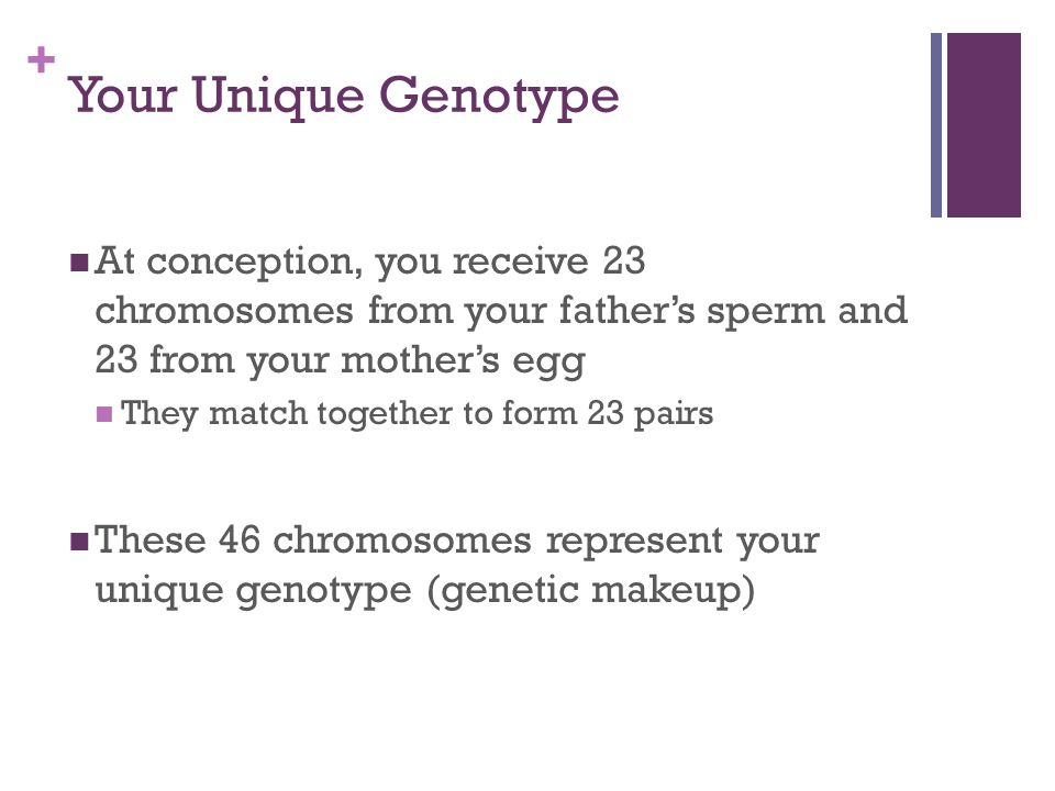 Your Unique Genotype At conception, you receive 23 chromosomes from your father's sperm and 23 from your mother's egg.