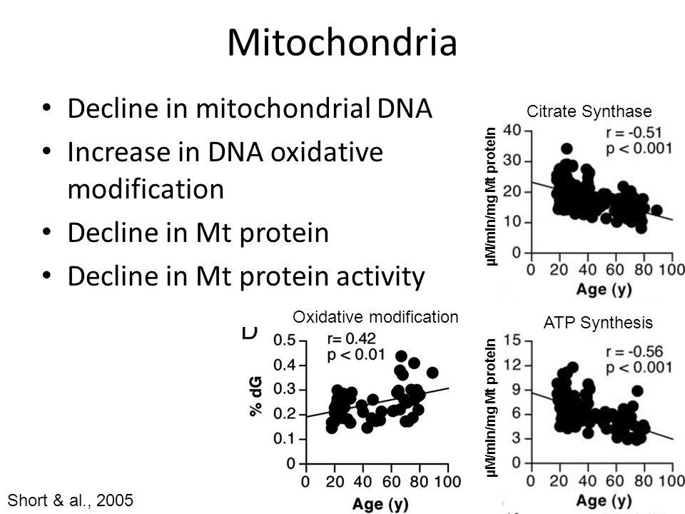 Mitochondria Decline in mitochondrial DNA