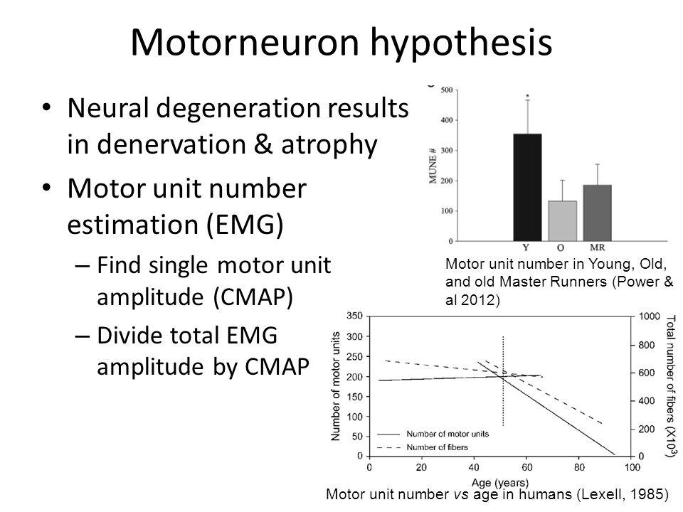 Motorneuron hypothesis