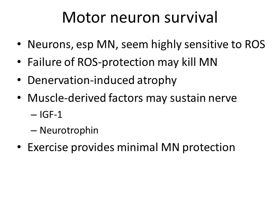 Motor neuron survival Neurons, esp MN, seem highly sensitive to ROS