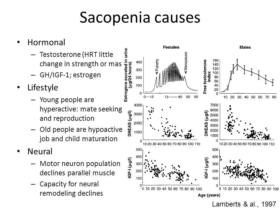 Sacopenia causes Hormonal Lifestyle Neural