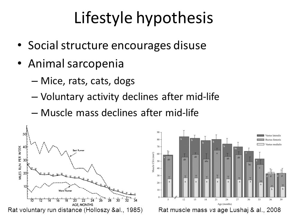 Lifestyle hypothesis Social structure encourages disuse