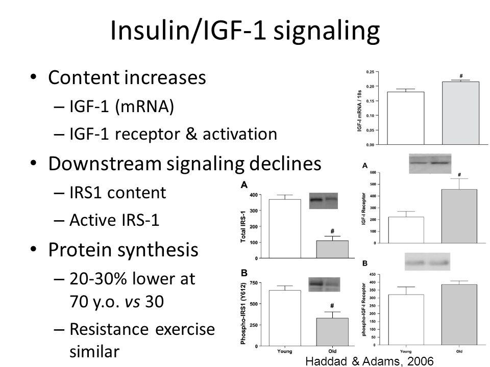Insulin/IGF-1 signaling