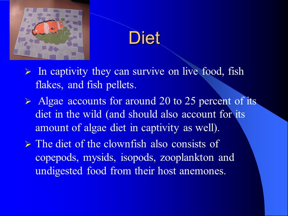 Diet In captivity they can survive on live food, fish flakes, and fish pellets.