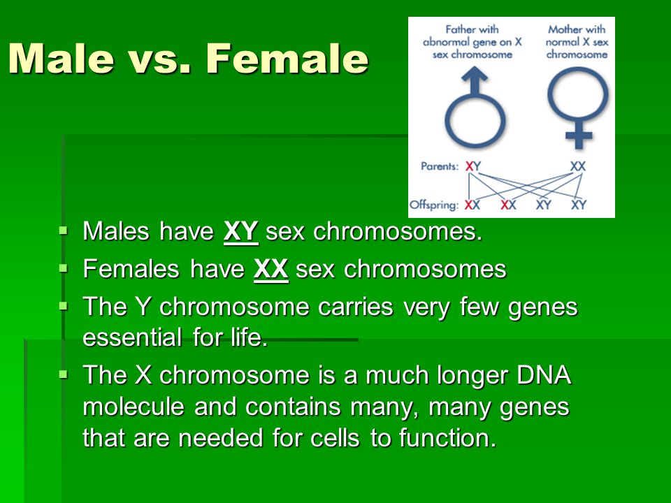 Male vs. Female Males have XY sex chromosomes.