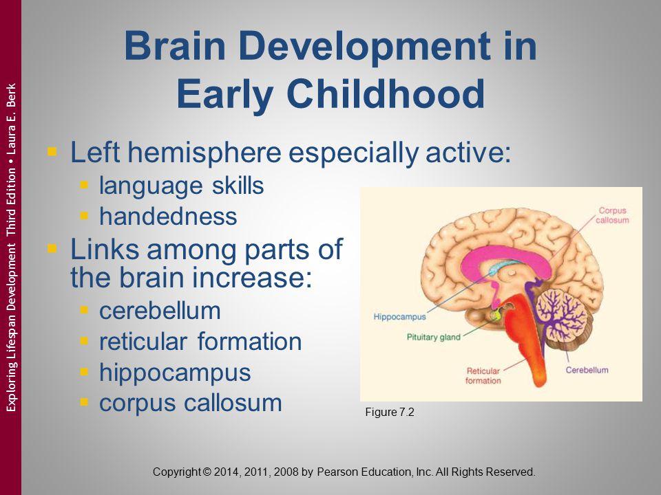 Brain Development in Early Childhood