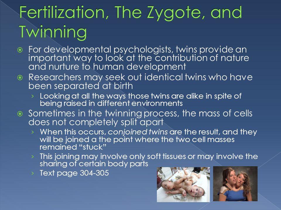 Fertilization, The Zygote, and Twinning