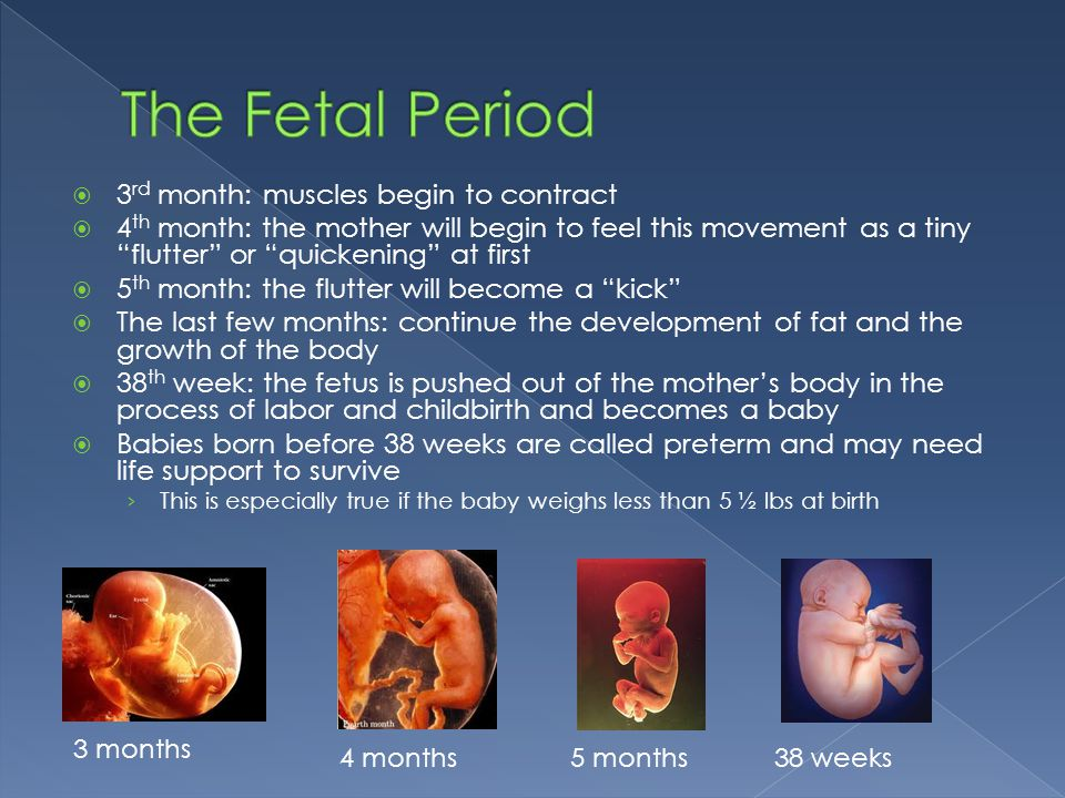 The Fetal Period 3rd month: muscles begin to contract
