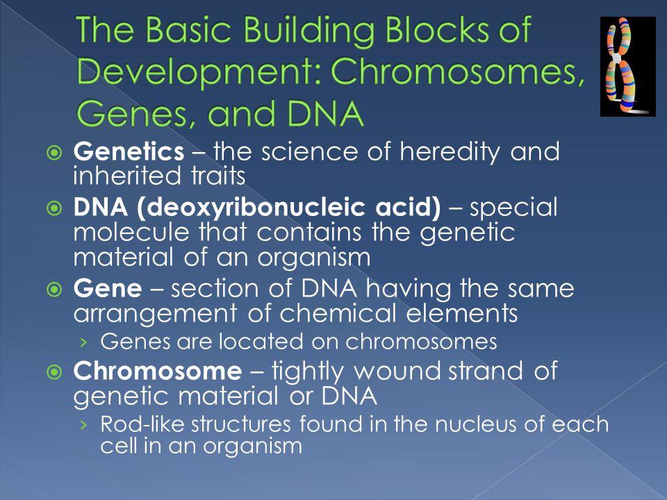 The Basic Building Blocks of Development: Chromosomes, Genes, and DNA
