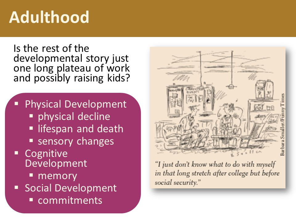 Adulthood Is the rest of the developmental story just one long plateau of work and possibly raising kids
