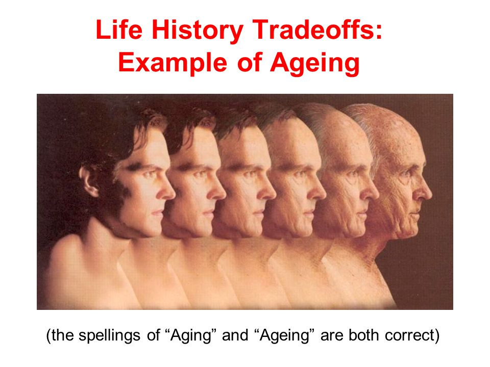 Life History Tradeoffs: Example of Ageing