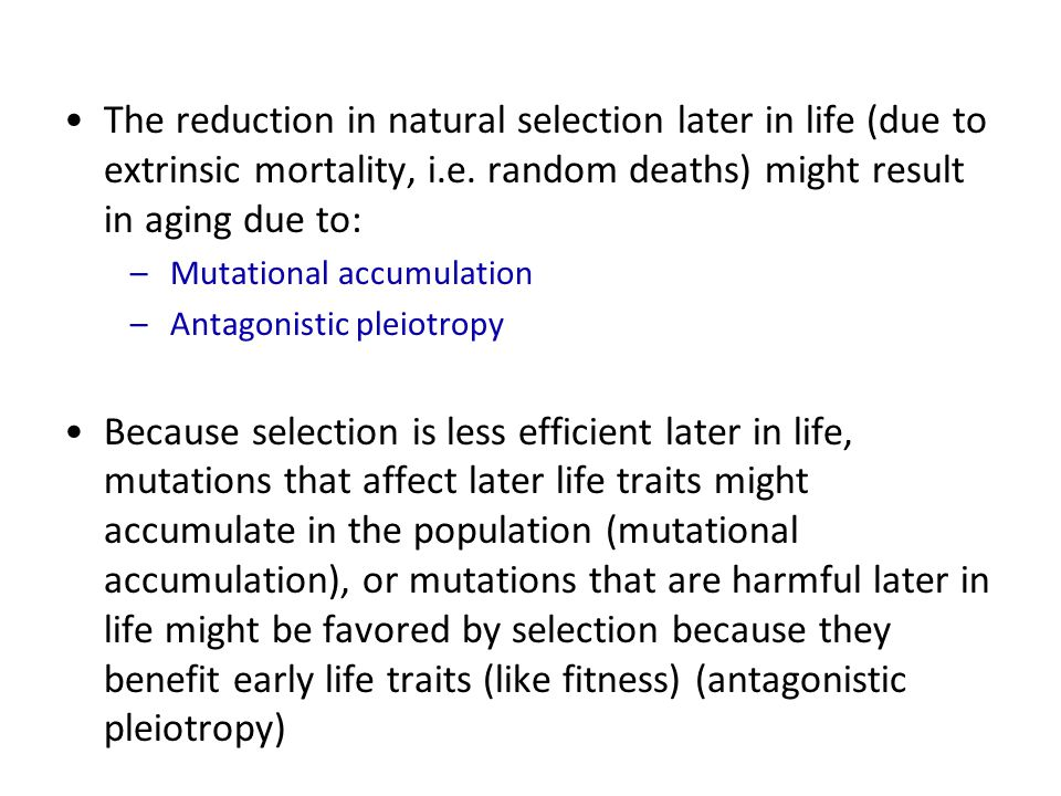 The reduction in natural selection later in life (due to extrinsic mortality, i.e. random deaths) might result in aging due to: