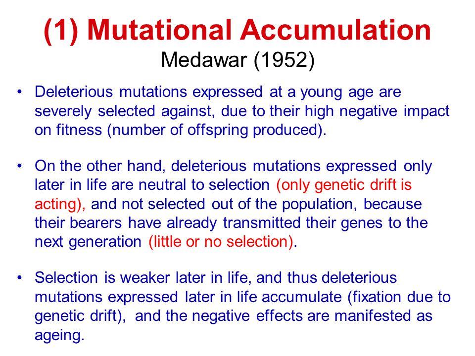 (1) Mutational Accumulation Medawar (1952)