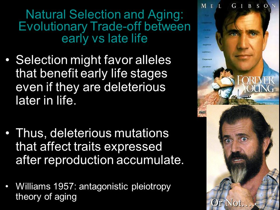 4/13/2017 Natural Selection and Aging: Evolutionary Trade-off between early vs late life.