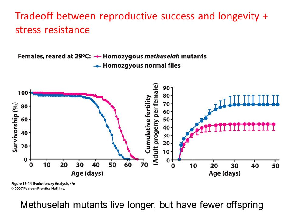 Tradeoff between reproductive success and longevity + stress resistance