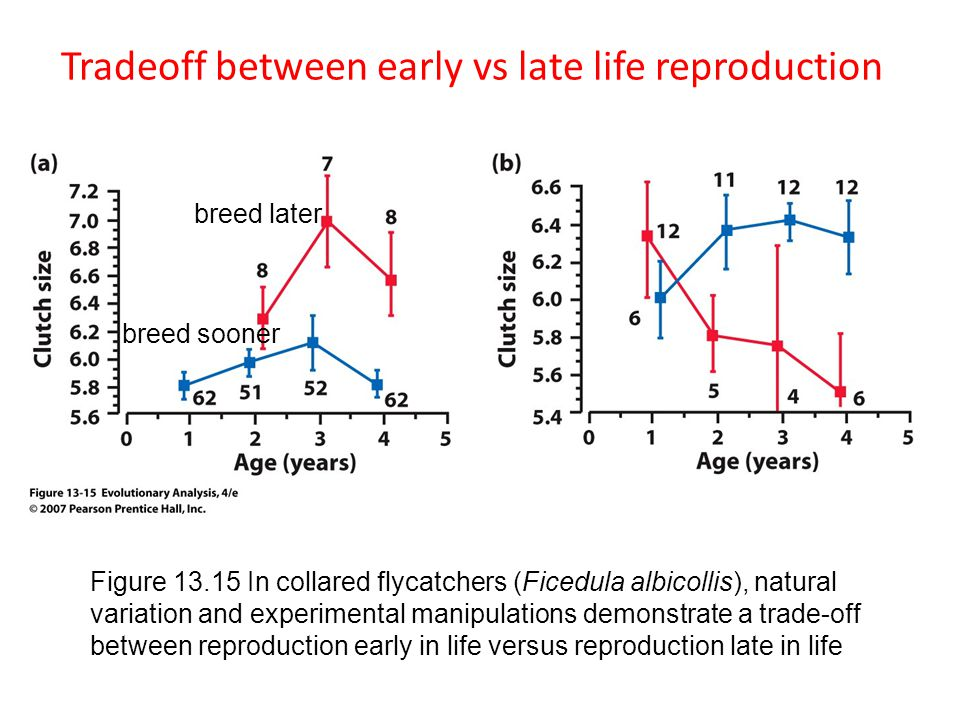 Tradeoff between early vs late life reproduction