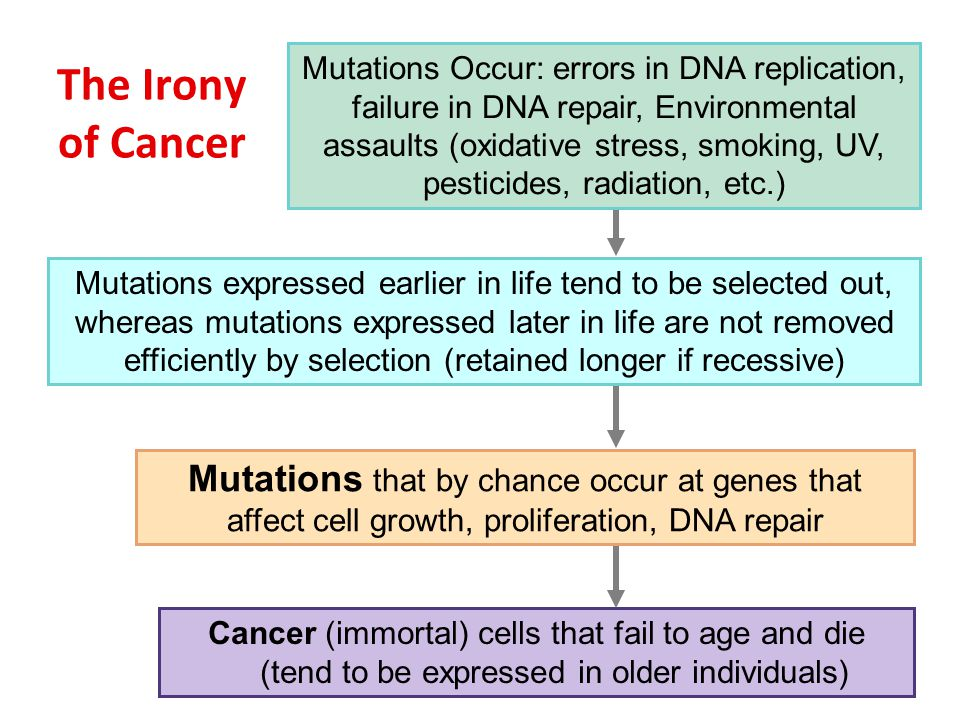 Mutations Occur: errors in DNA replication, failure in DNA repair, Environmental assaults (oxidative stress, smoking, UV, pesticides, radiation, etc.)