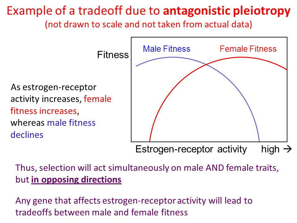Example of a tradeoff due to antagonistic pleiotropy (not drawn to scale and not taken from actual data)