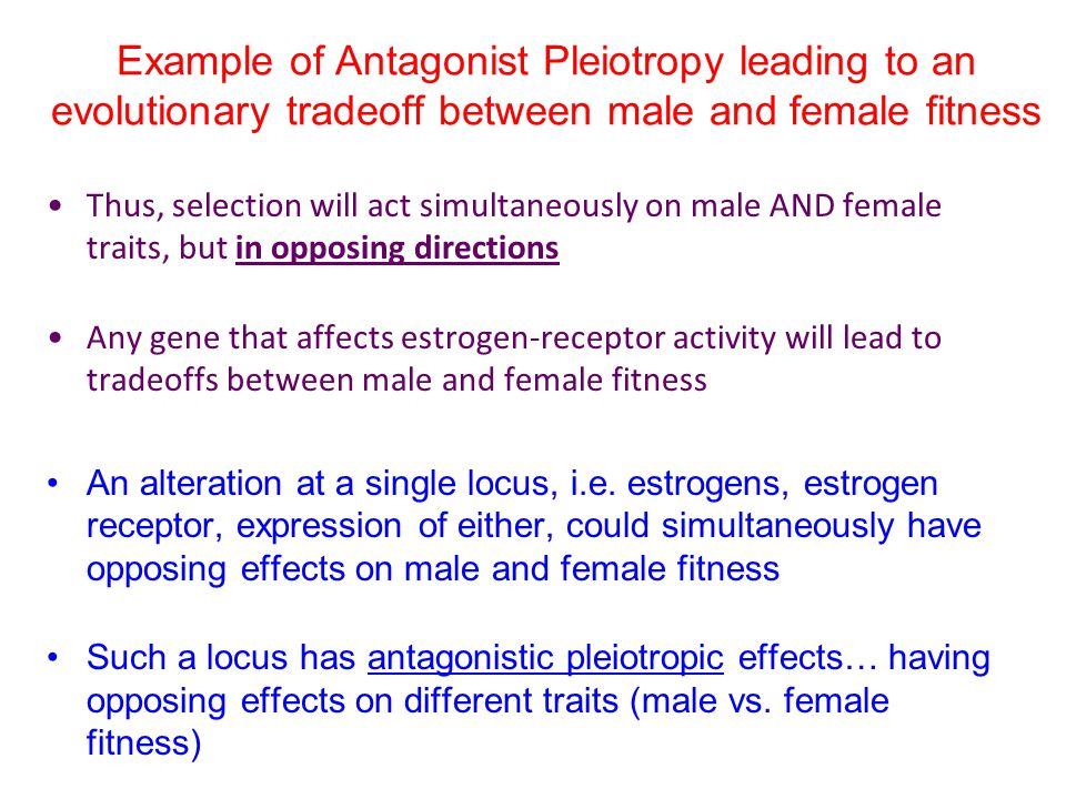 Example of Antagonist Pleiotropy leading to an evolutionary tradeoff between male and female fitness
