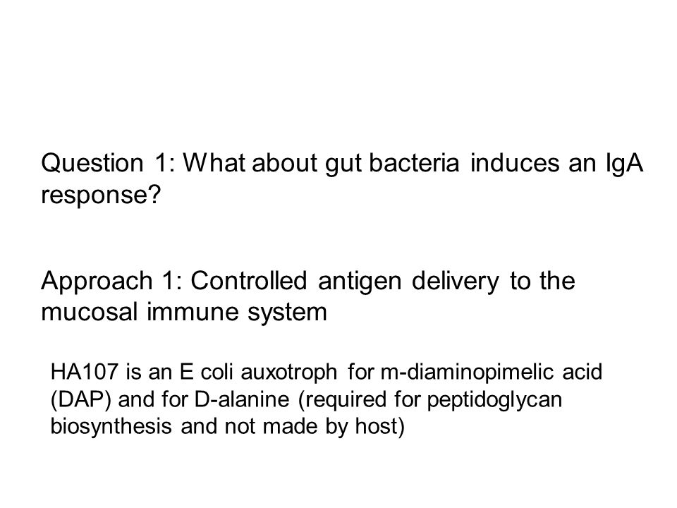 Question 1: What about gut bacteria induces an IgA response