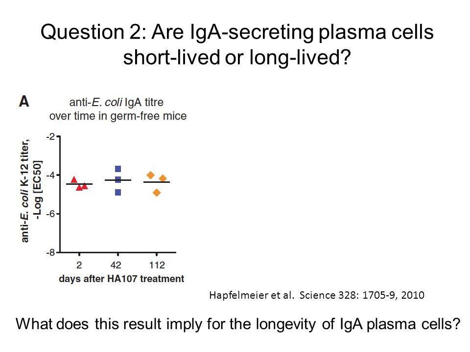Question 2: Are IgA-secreting plasma cells short-lived or long-lived