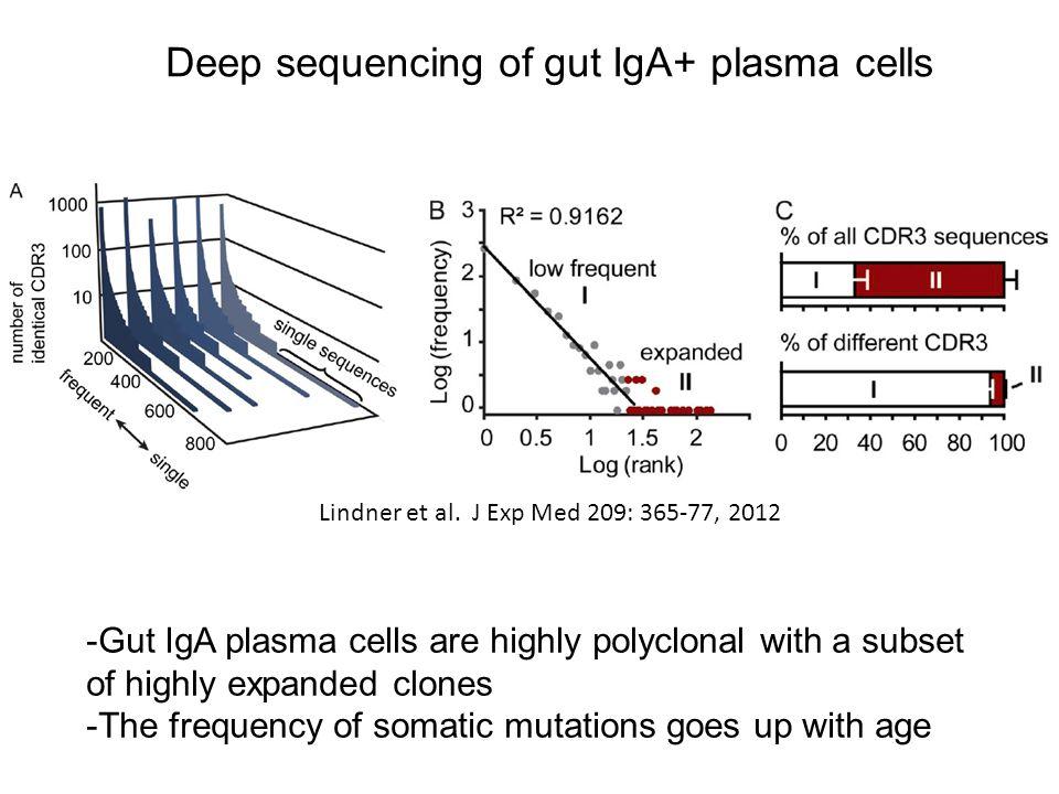 Deep sequencing of gut IgA+ plasma cells