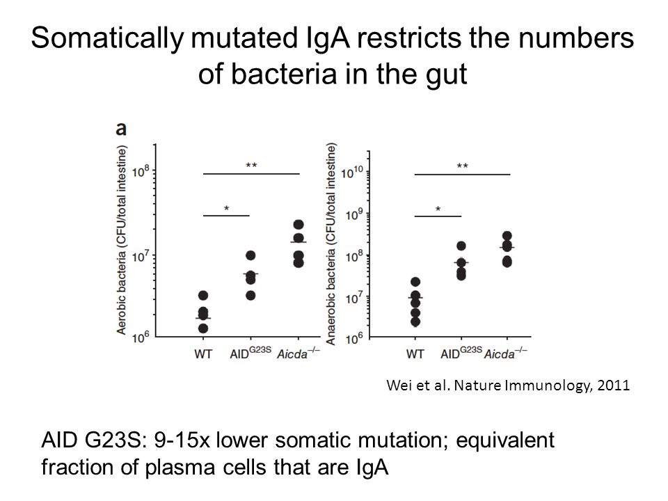 Somatically mutated IgA restricts the numbers of bacteria in the gut