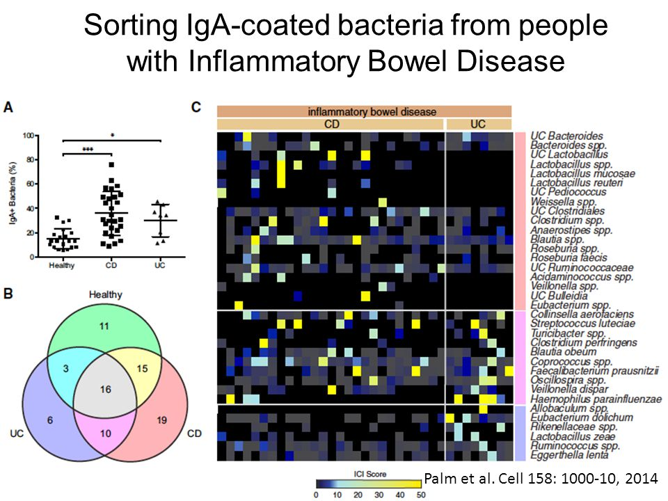 Sorting IgA-coated bacteria from people with Inflammatory Bowel Disease