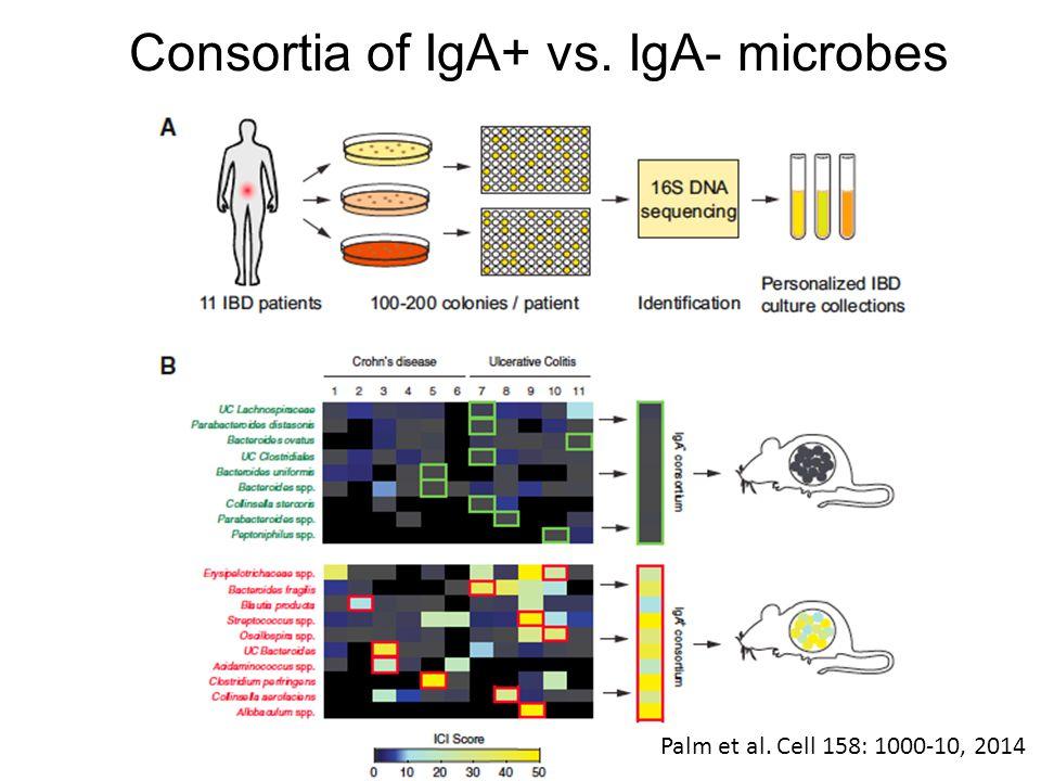 Consortia of IgA+ vs. IgA- microbes